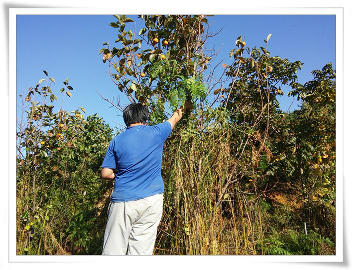 가을종근식재 (3).jpg