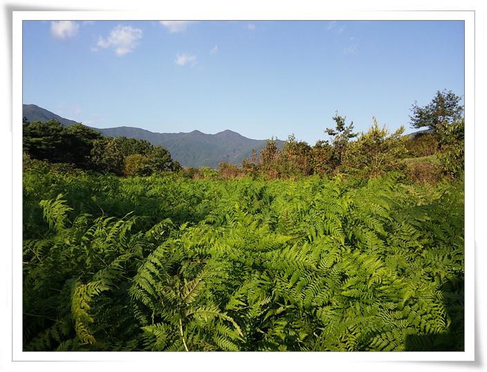 가을종근식재 (1).jpg