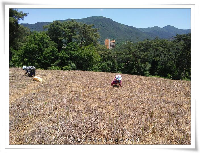 고사리수확 (9)b.jpg